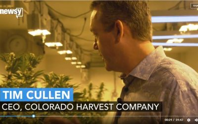 This Cannabis CEO Used To Be A High School Biology Teacher