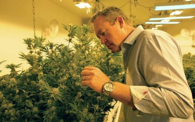 Colorado Harvest Company CEO Tim Cullen Joins Colorado Dept. of Agriculture Cannabis Work Group