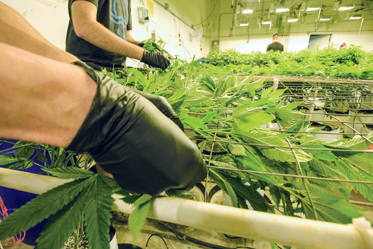 5 Traits to Look for in Potential Dispensary Employees