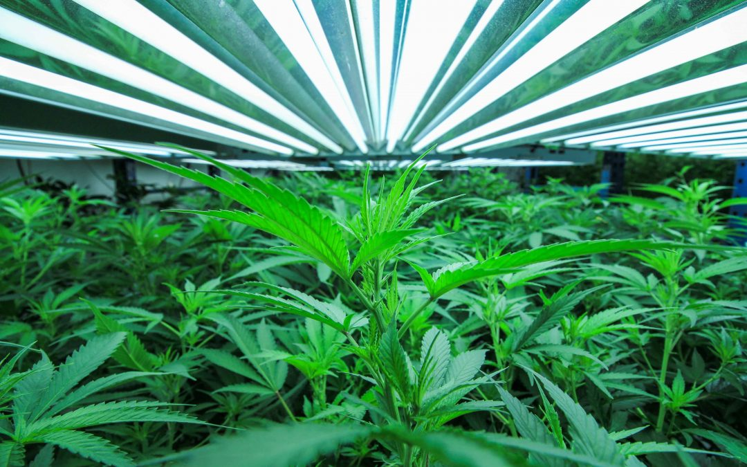 As the debate on marijuana legalization continues, Michiganders look at Colorado