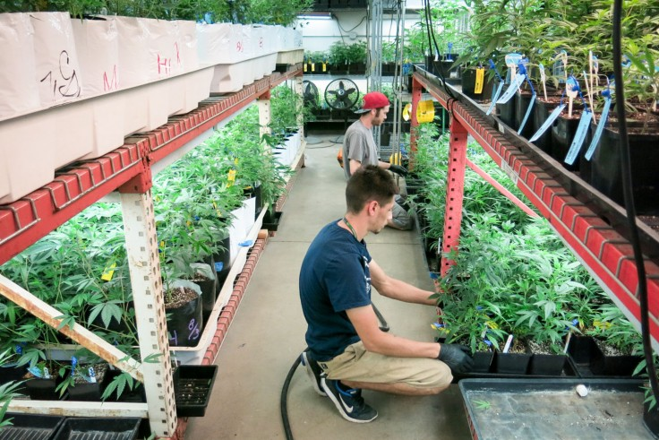 Nearly 4 Percent Of Denver's Electricity Is Now Devoted To Marijuana