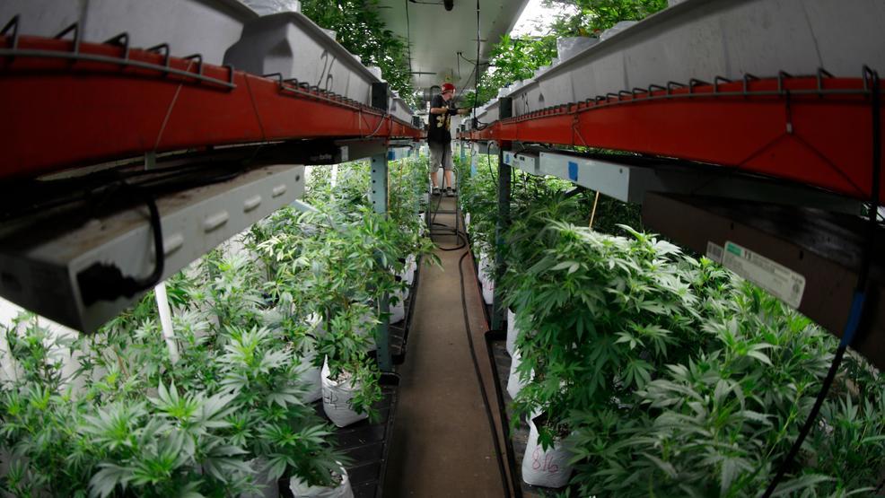 Colorado marijuana sales exceeded $1B through August