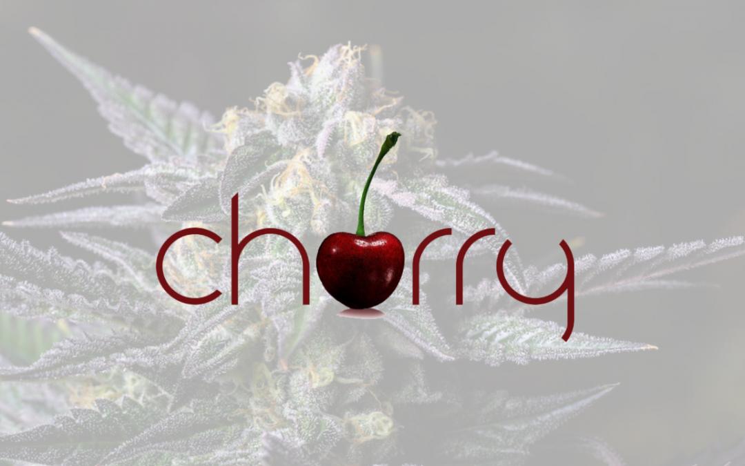 Cherry – Premium Cannabis Flower