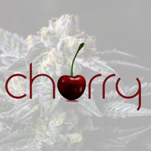 cherry premium cannabis flower