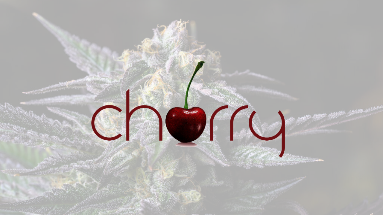 cherry premium cannabis flower