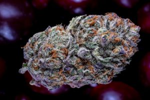 Grape Stomper by Cherry
