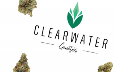 Clearwater Genetics – Recreational Cannabis