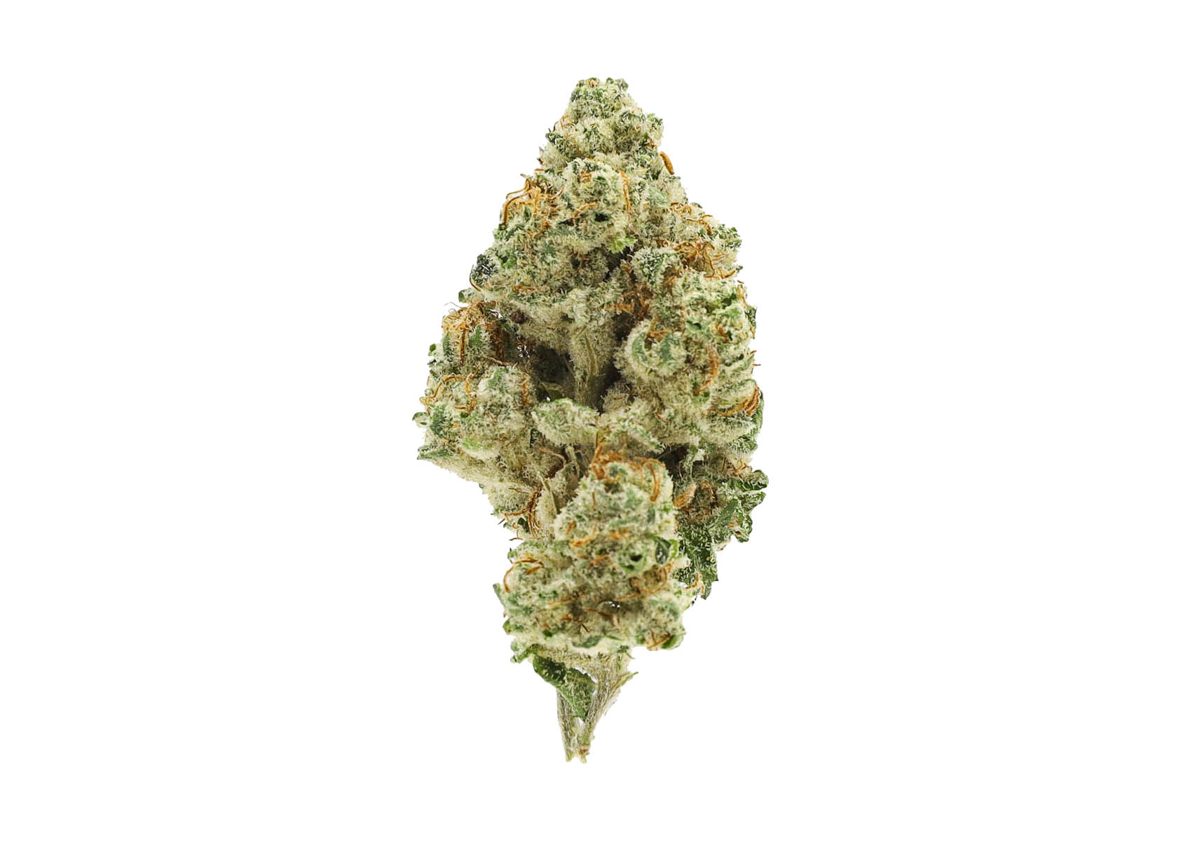 Exotic Strain Slippery Susan