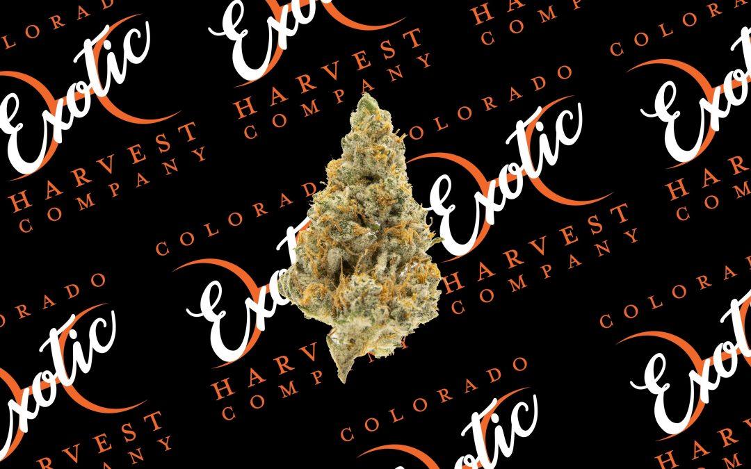 Exotic Cannabis Strains By Colorado Harvest Company